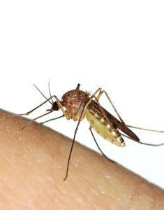 moustique-piqure-moustique-chasser -les -moustiques