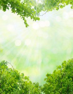 37167614 – green leaves in heart shape